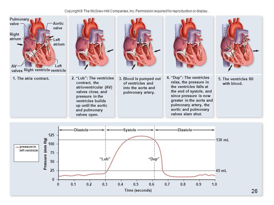 atrioventricular (AV) valves close, and pressure in the
