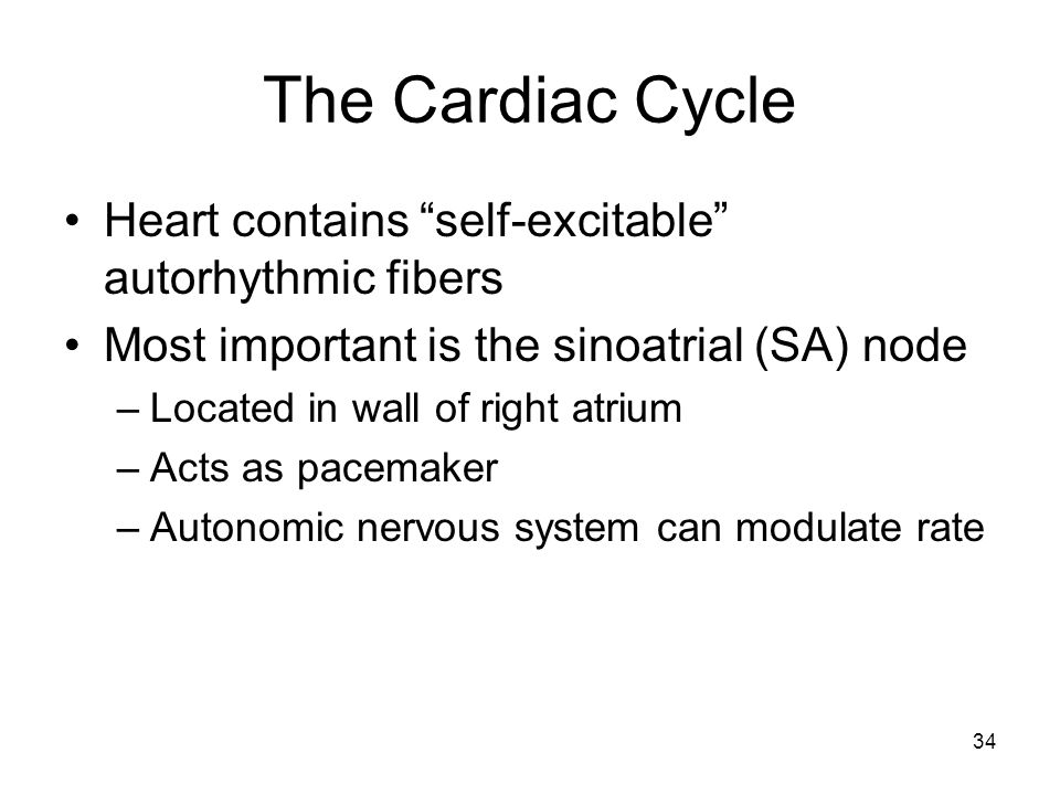 The Cardiac Cycle Heart contains self-excitable autorhythmic fibers