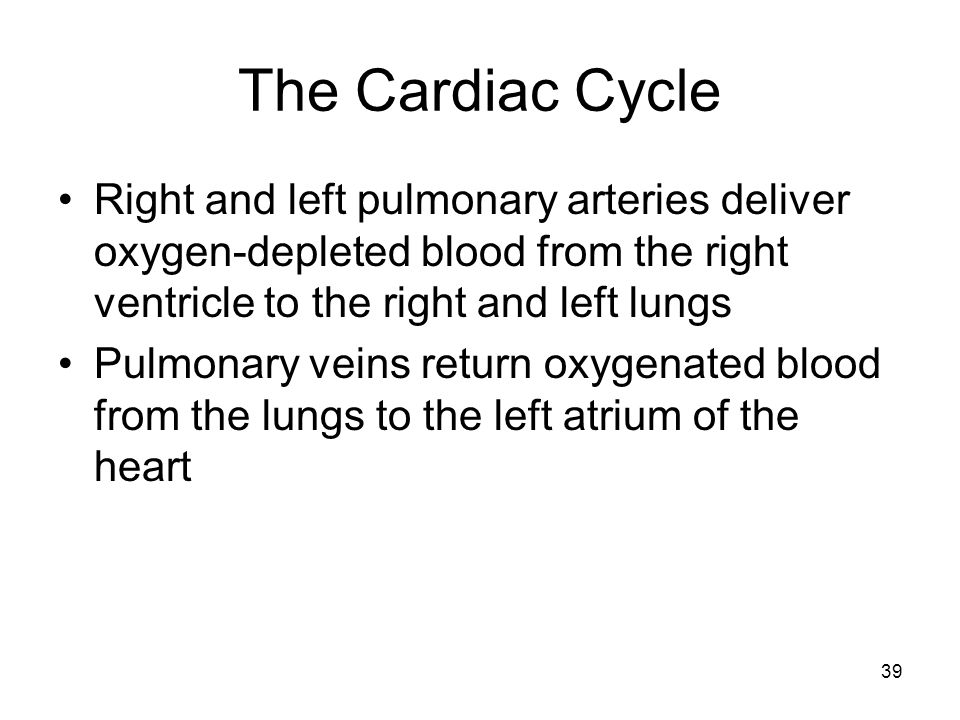 The Cardiac CycleRight and left pulmonary arteries deliver oxygen-depleted blood from the right ventricle to the right and left lungs.