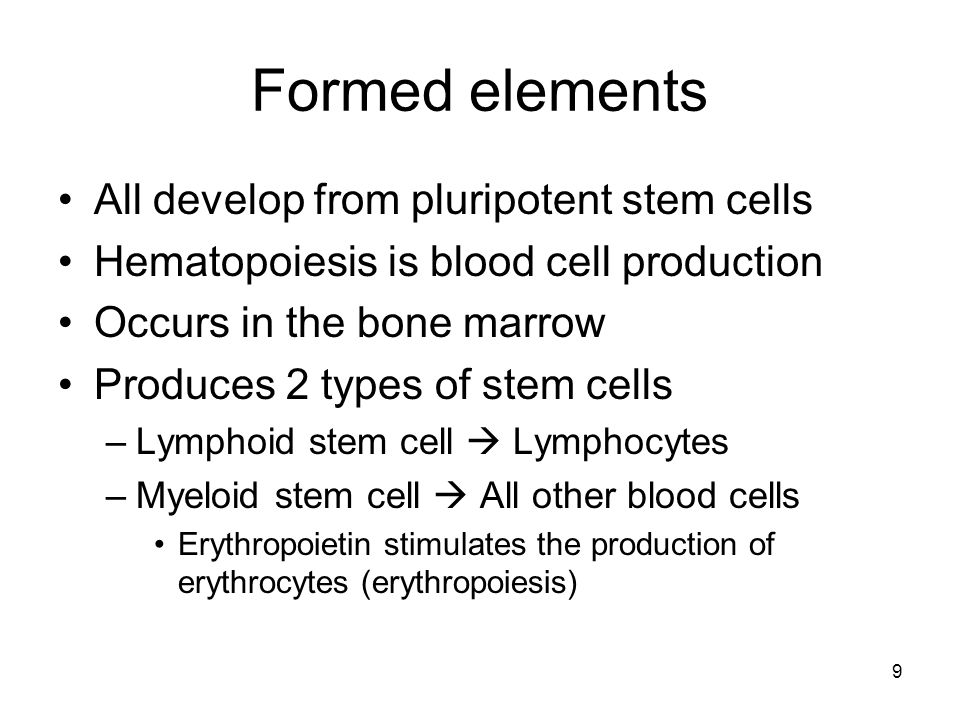 Formed elements All develop from pluripotent stem cells