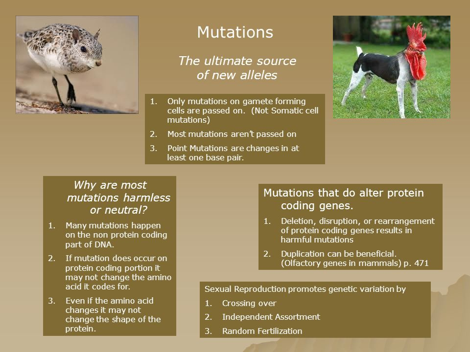 Mutations The ultimate source of new alleles