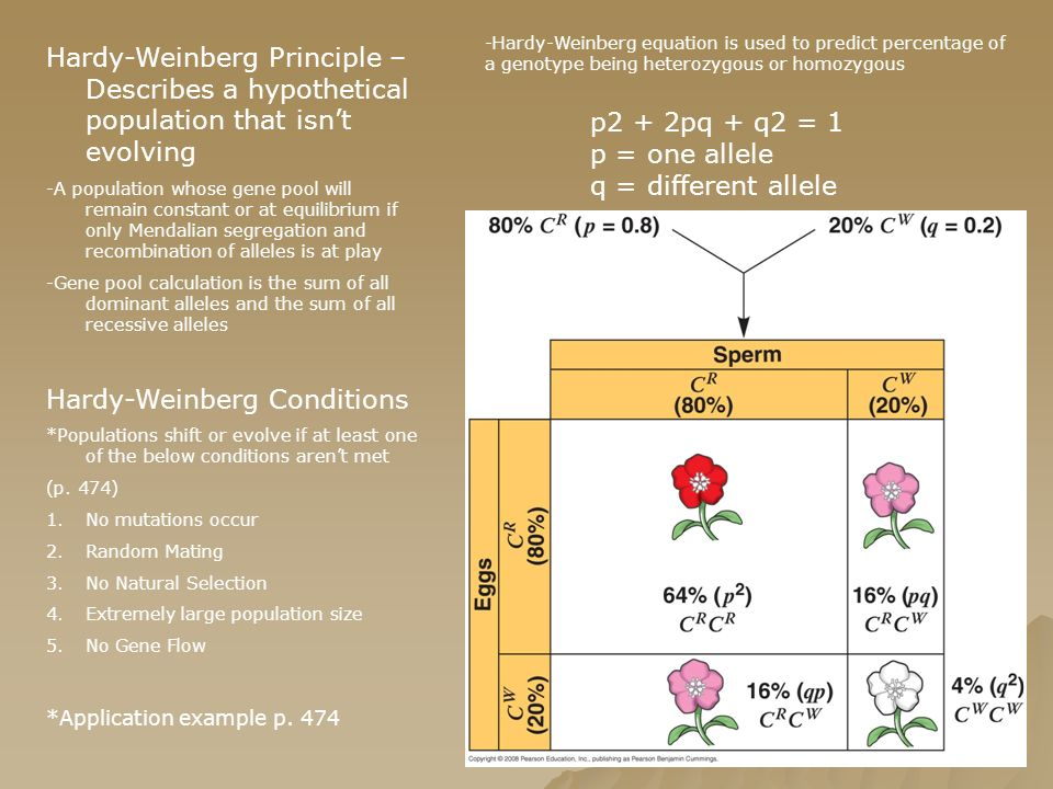 Hardy-Weinberg Conditions
