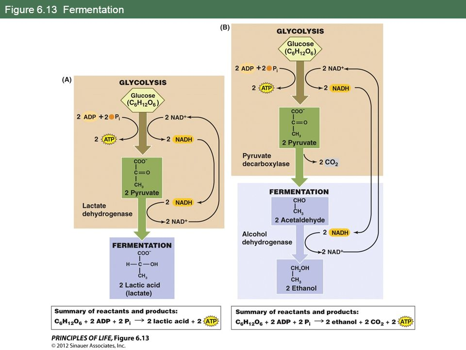 Figure 6.13 Fermentation