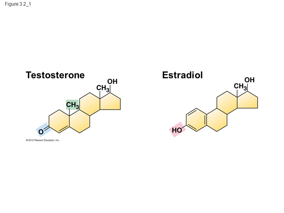 Testosterone Estradiol Figure 3.2_1