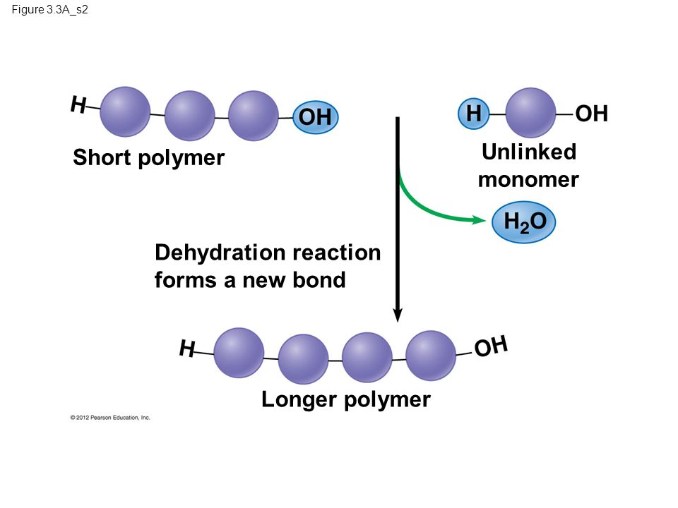 Dehydration reaction forms a new bond