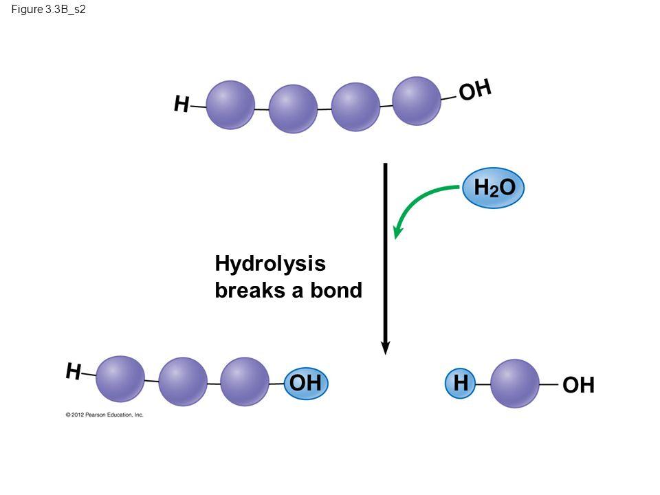 Hydrolysis breaks a bond