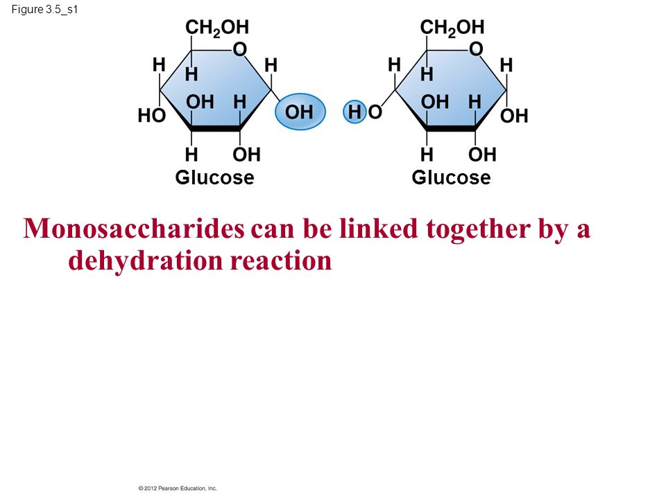 Monosaccharides can be linked together by a dehydration reaction