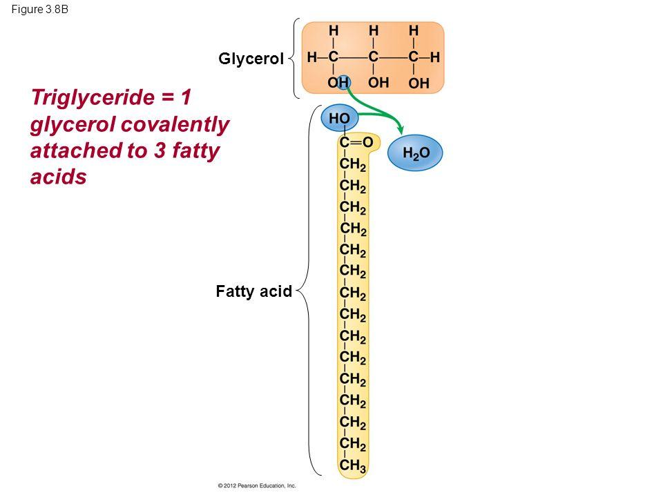 Triglyceride = 1 glycerol covalently attached to 3 fatty acids