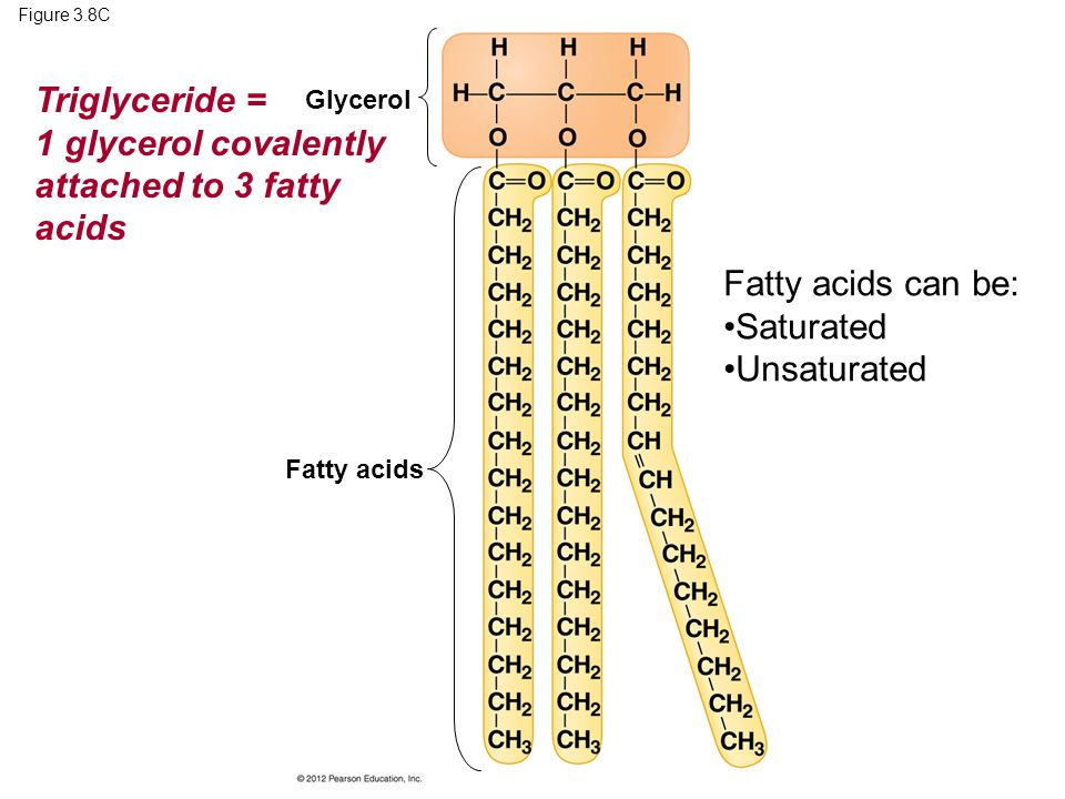 1 glycerol covalently attached to 3 fatty acids