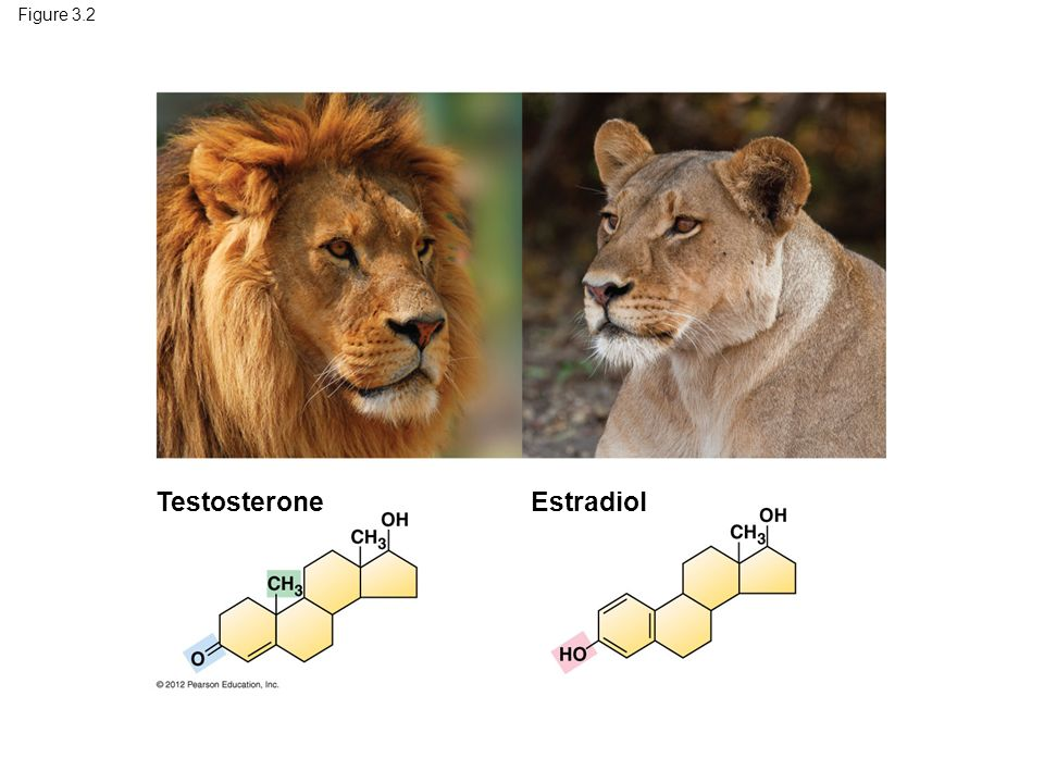 Testosterone Estradiol Figure 3.2