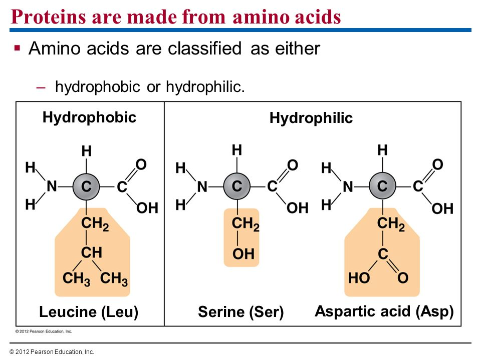 Proteins are made from amino acids