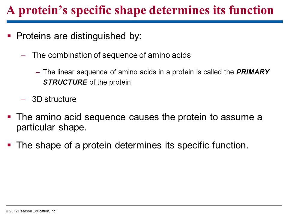 A protein's specific shape determines its function