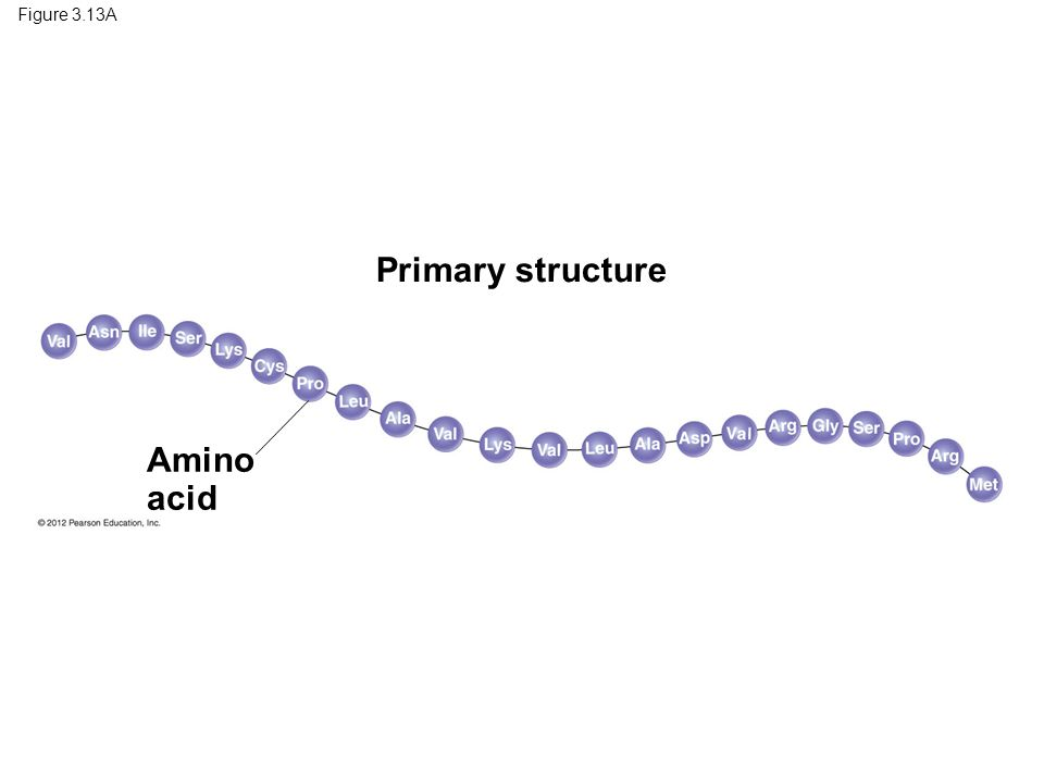 Primary structure Amino acid Figure 3.13A