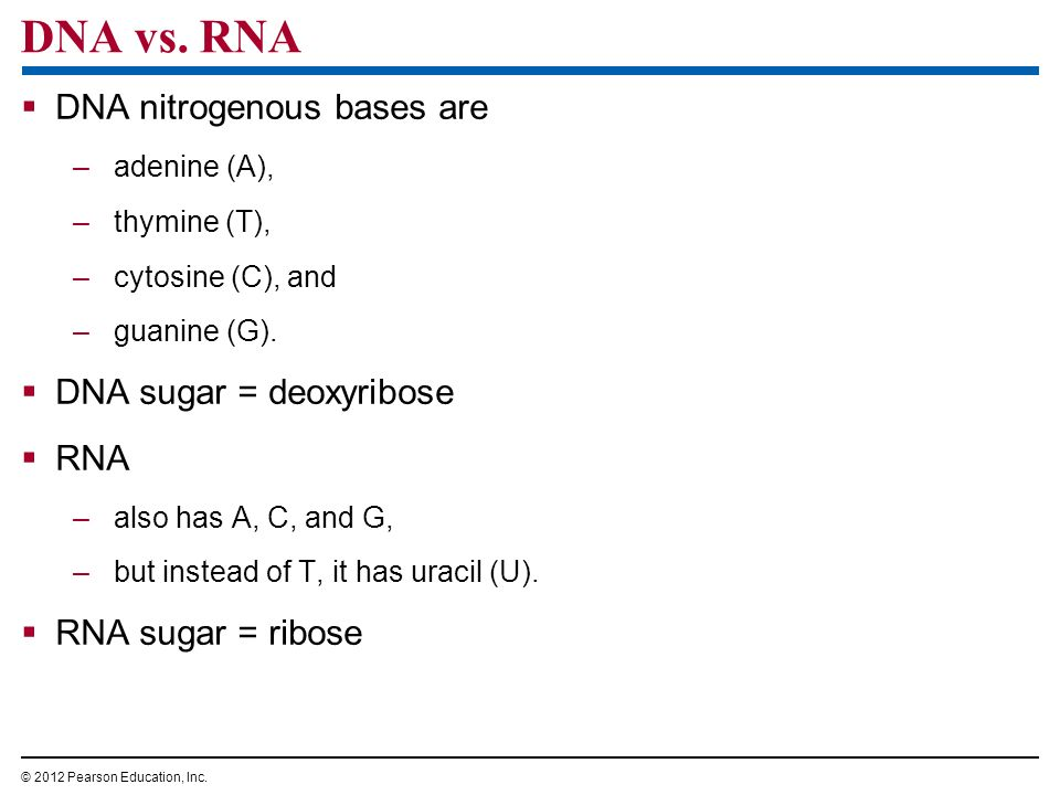 DNA vs. RNA DNA nitrogenous bases are DNA sugar = deoxyribose RNA