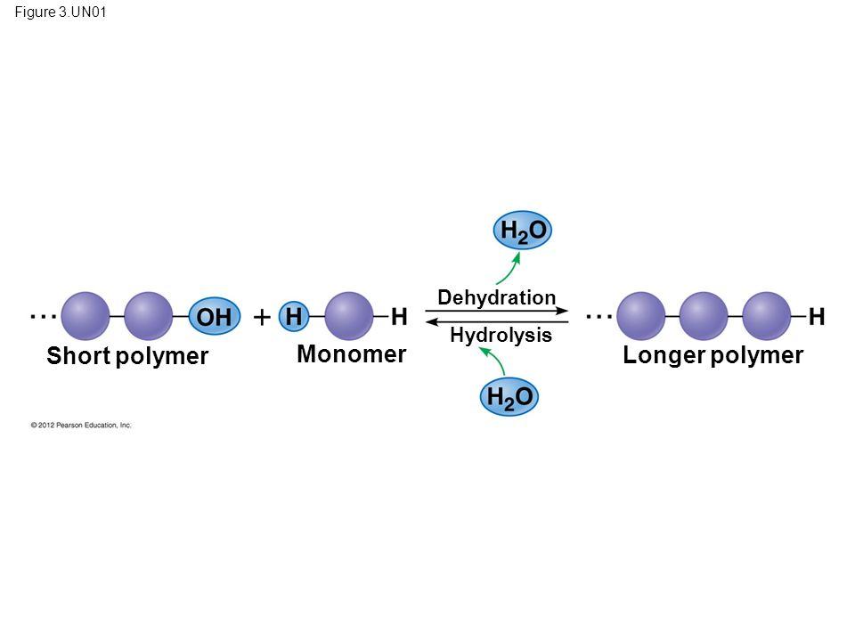 Short polymer Monomer Longer polymer Dehydration Hydrolysis
