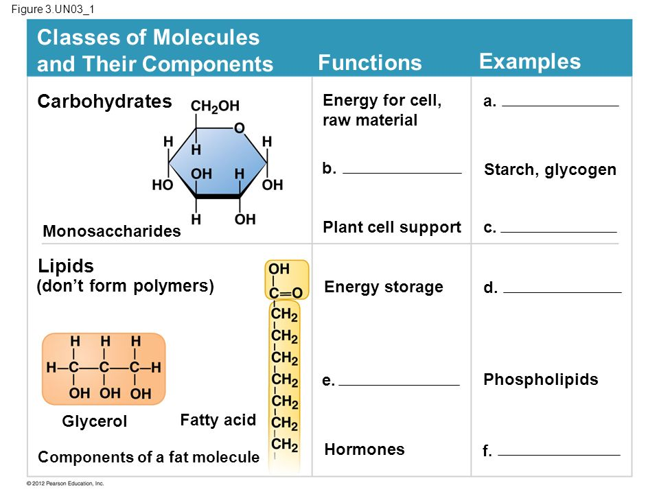 Classes of Molecules and Their Components Functions Examples