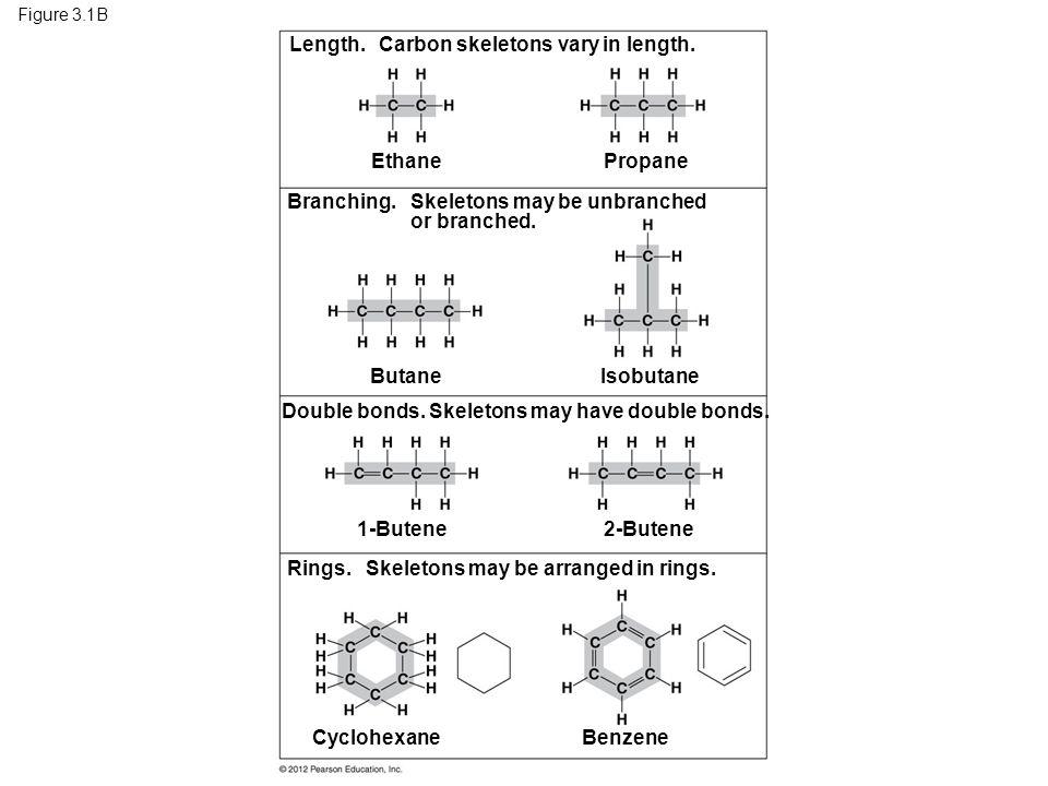 Length. Carbon skeletons vary in length.