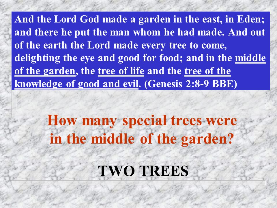 How many special trees were in the middle of the garden
