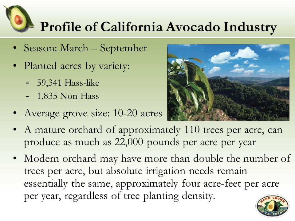 Profile of California Avocado Industry