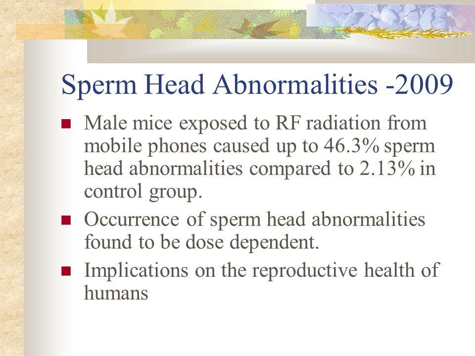 Sperm Head Abnormalities -2009