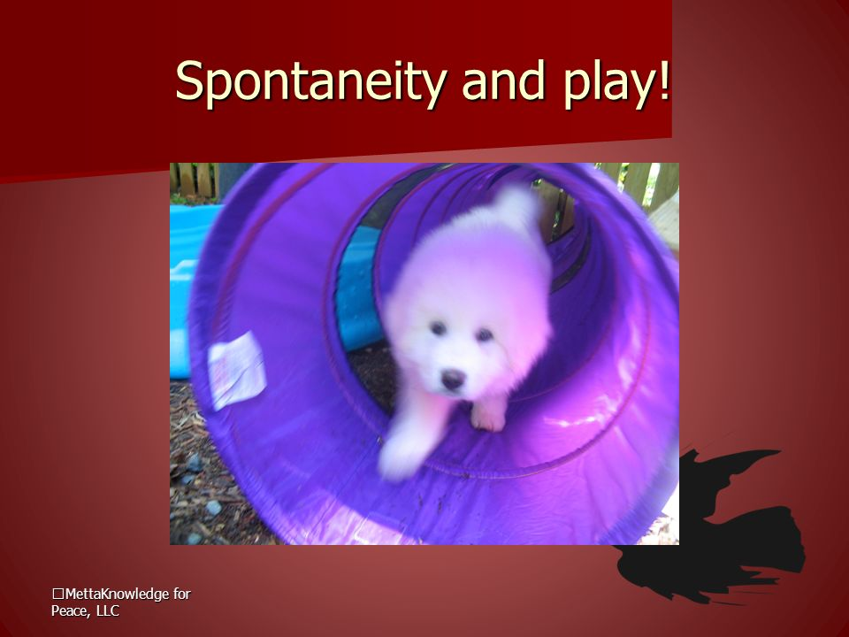 Spontaneity and play! MettaKnowledge for Peace, LLC