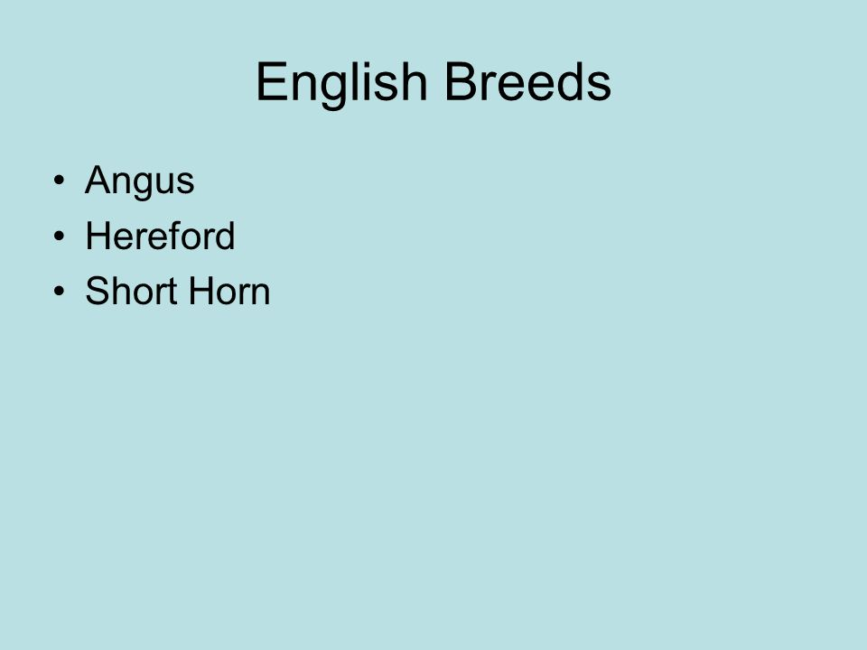 English Breeds Angus Hereford Short Horn