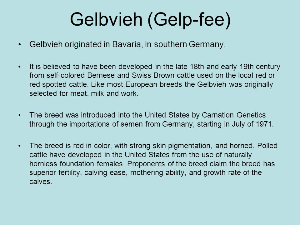 Gelbvieh (Gelp-fee)Gelbvieh originated in Bavaria, in southern Germany.