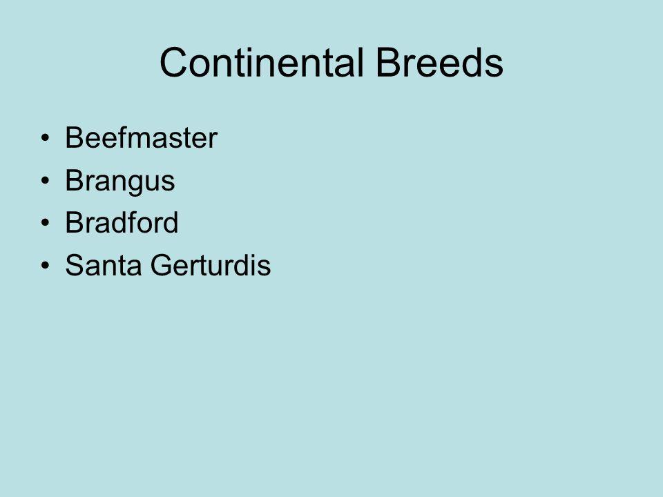 Continental Breeds Beefmaster Brangus Bradford Santa Gerturdis