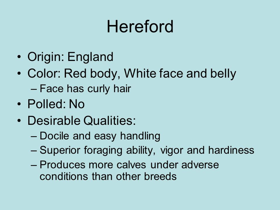 Hereford Origin: England Color: Red body, White face and belly