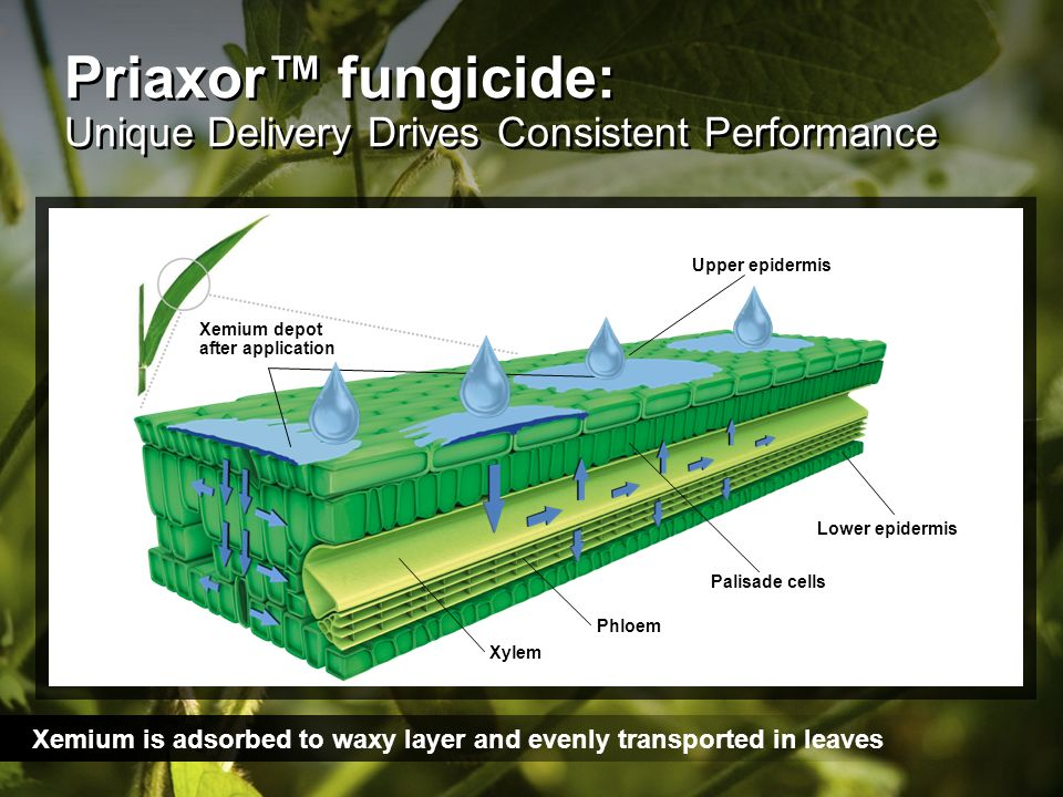 Priaxor™ fungicide: Unique Delivery Drives Consistent Performance