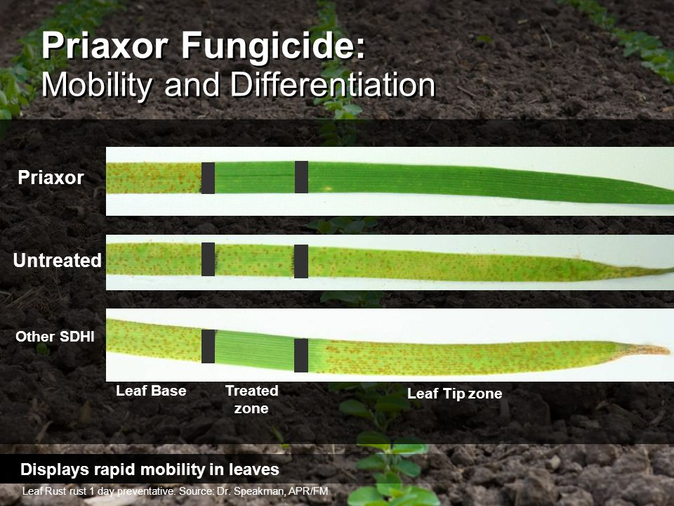 Priaxor Fungicide: Mobility and Differentiation
