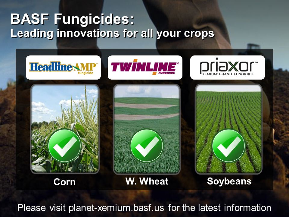 BASF Fungicides: Leading innovations for all your crops