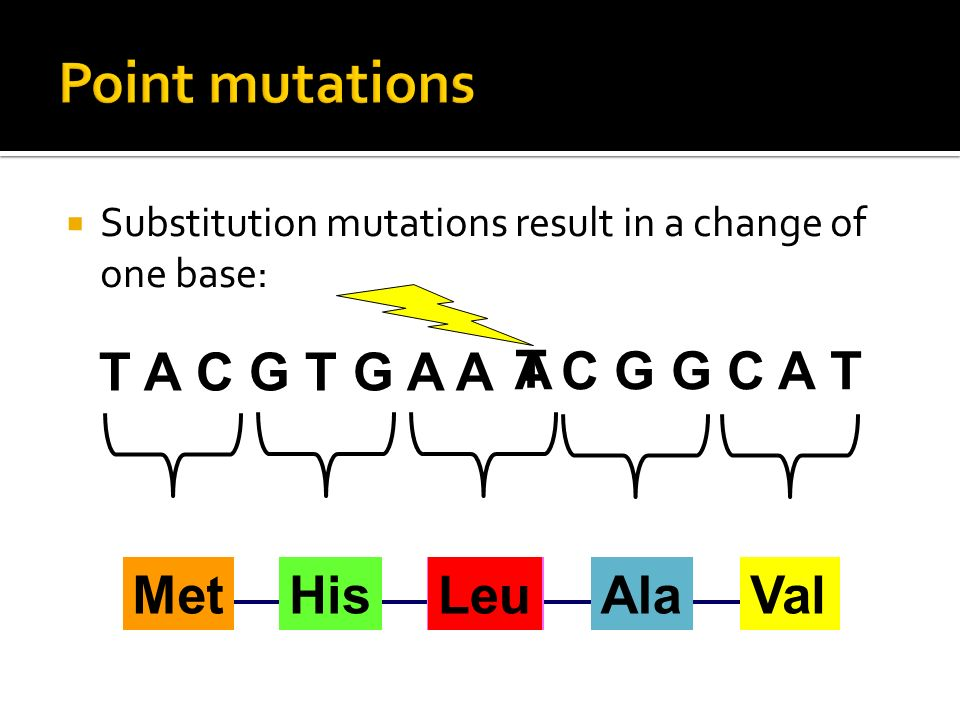 Point mutations T A C G T G A A A T C G G C A T Met His Phe Leu Ala