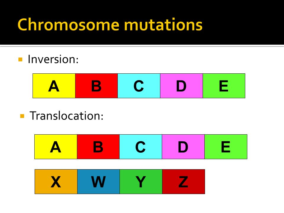 Chromosome mutations B A C D E B A C D E W X Z Y Inversion: