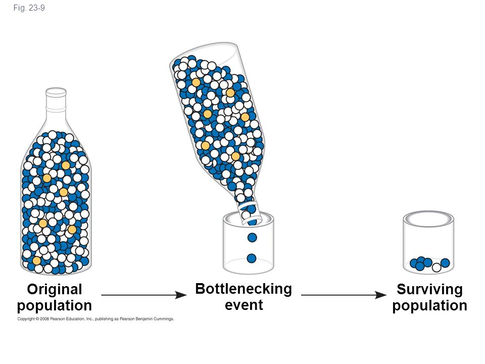 Original population Bottlenecking event Surviving population
