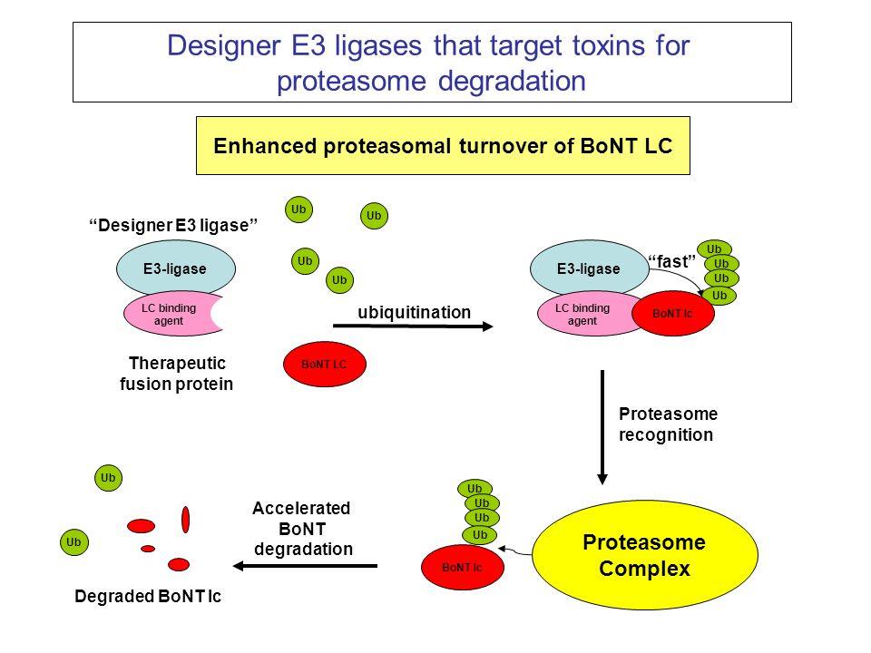 Enhanced proteasomal turnover of BoNT LC Therapeutic fusion protein
