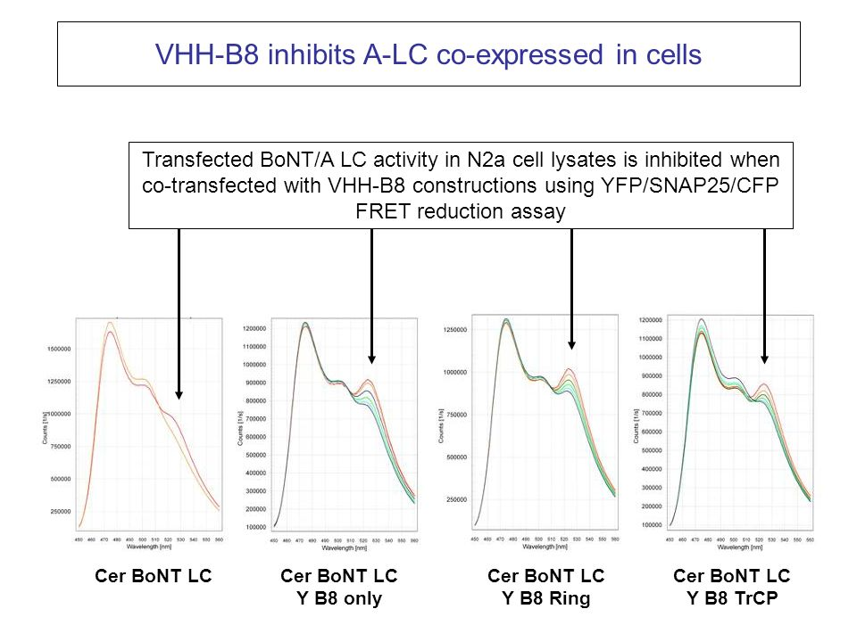 VHH-B8 inhibits A-LC co-expressed in cells