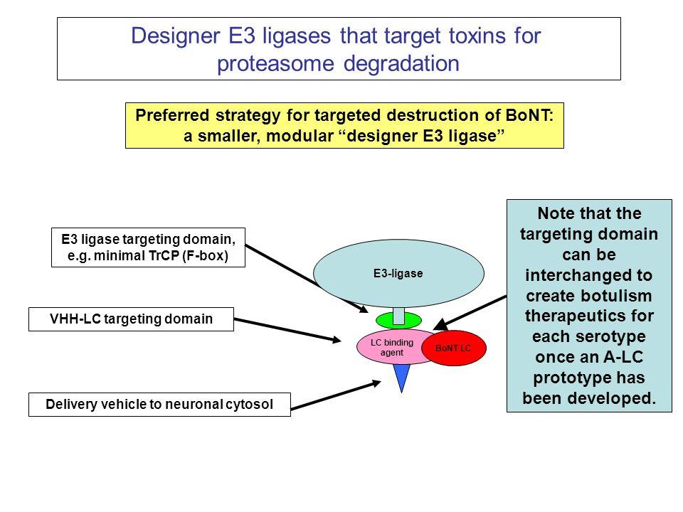 Designer E3 ligases that target toxins for proteasome degradation