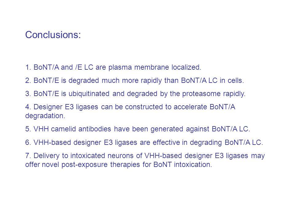 Conclusions: 1. BoNT/A and /E LC are plasma membrane localized.