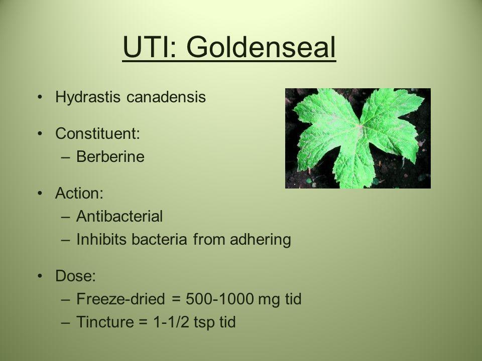 UTI: Goldenseal Hydrastis canadensis Constituent: Berberine Action: