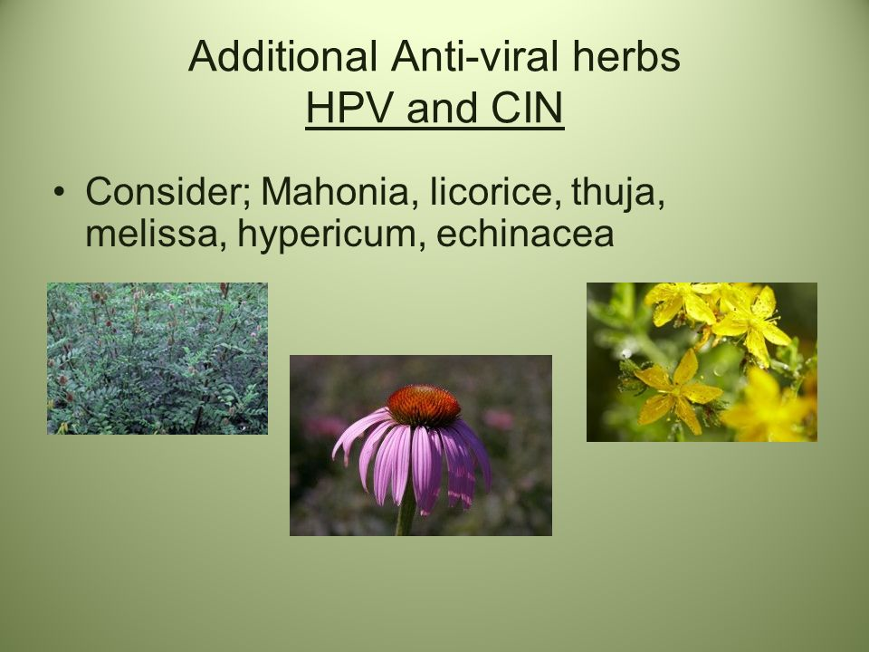 Additional Anti-viral herbs HPV and CIN