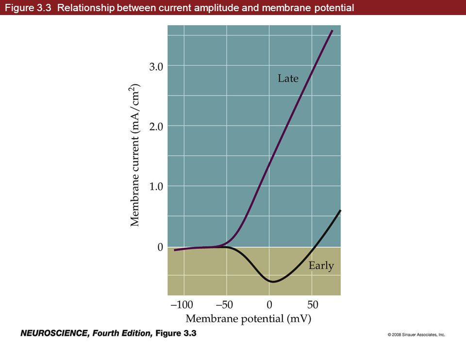 Figure 3.3 Relationship between current amplitude and membrane potential