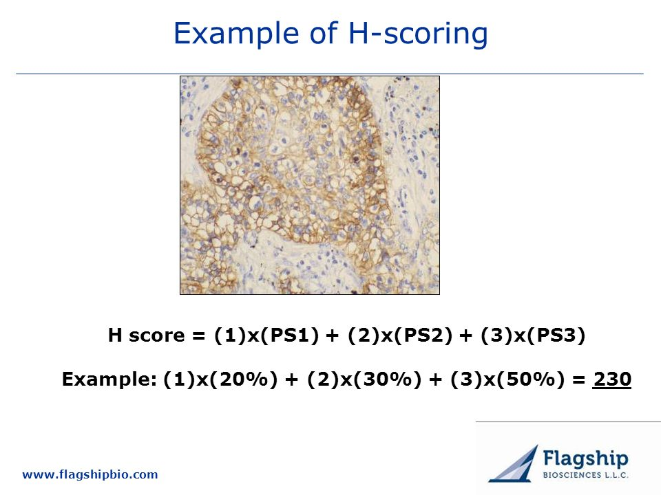 25 March 2017 New Targets Committee Example of H-scoring