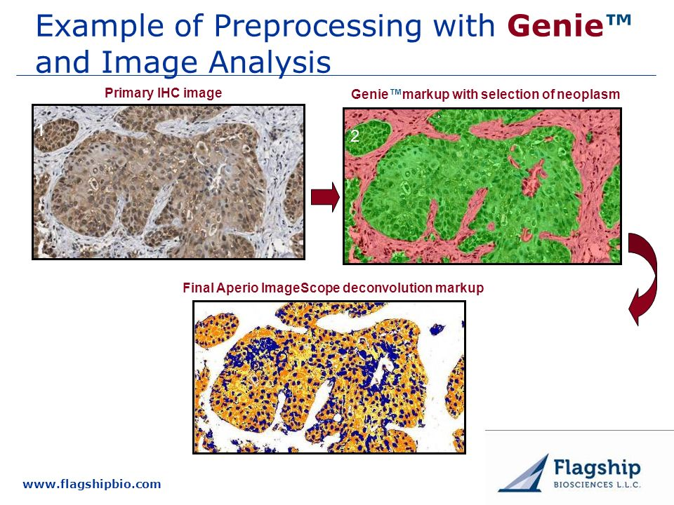 Example of Preprocessing with Genie™ and Image Analysis