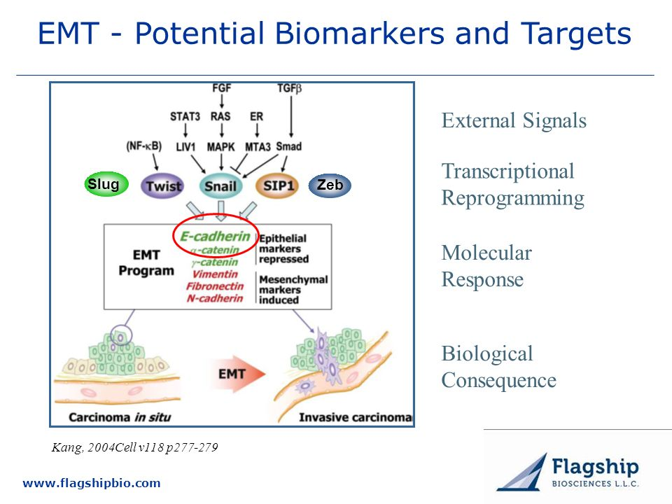 EMT - Potential Biomarkers and Targets