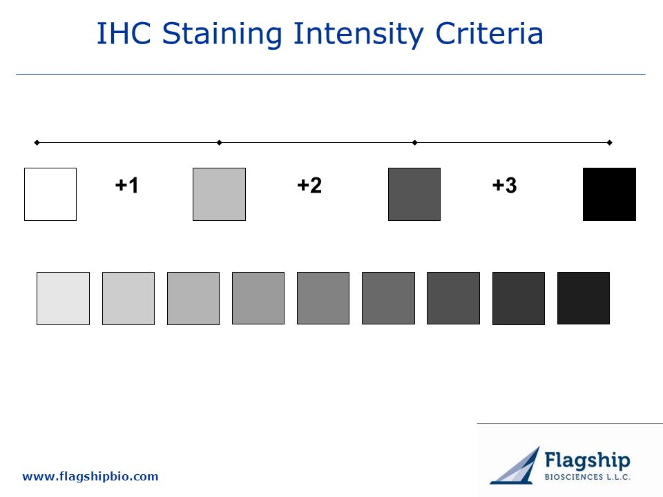 IHC Staining Intensity Criteria