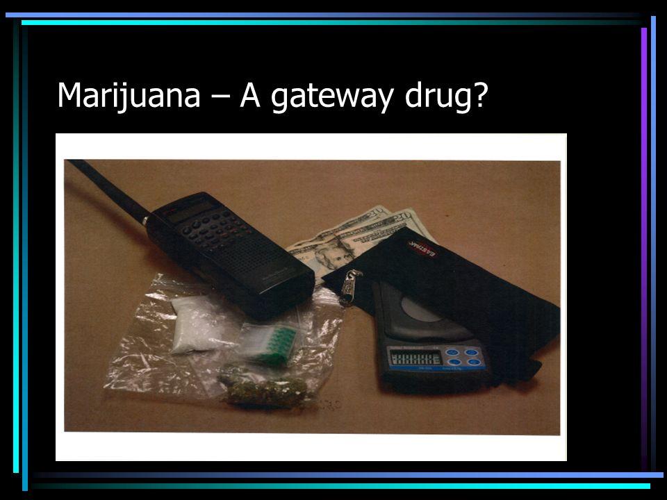 Marijuana – A gateway drug