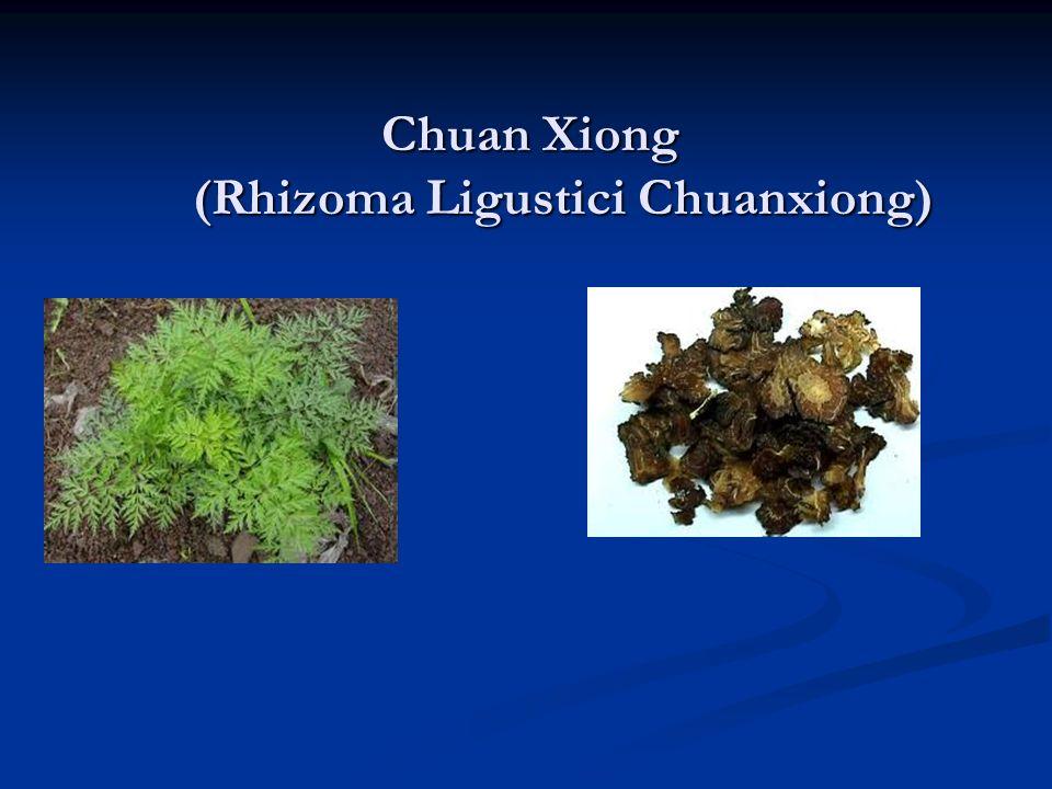 Chuan Xiong (Rhizoma Ligustici Chuanxiong)