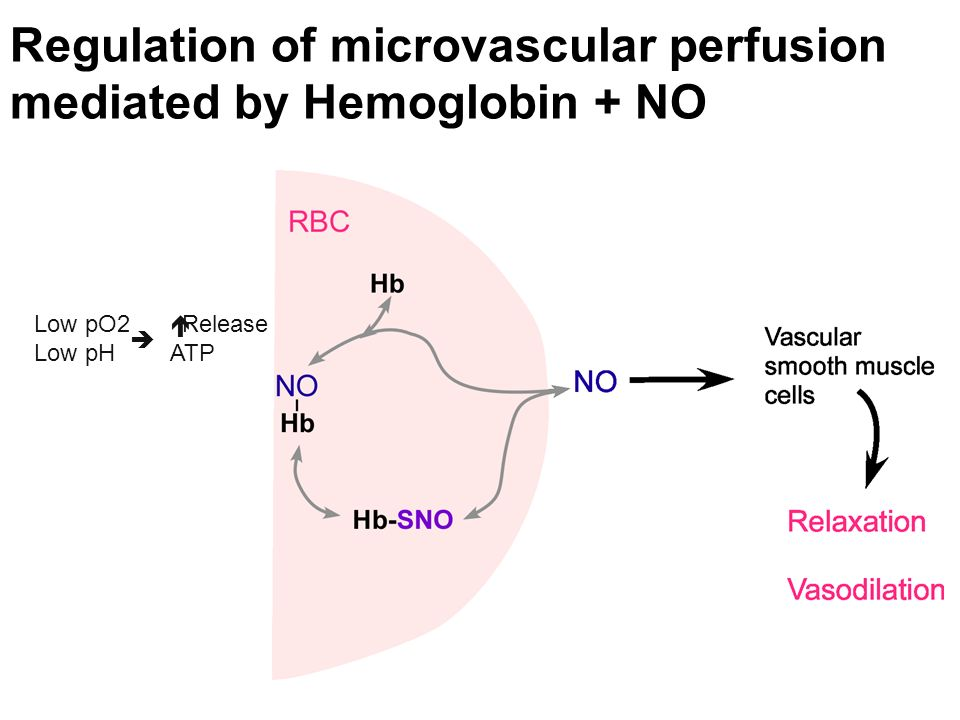 Regulation of microvascular perfusion mediated by Hemoglobin + NO