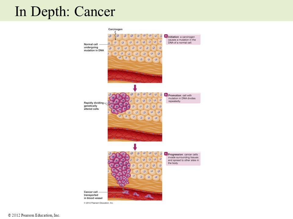In Depth: Cancer